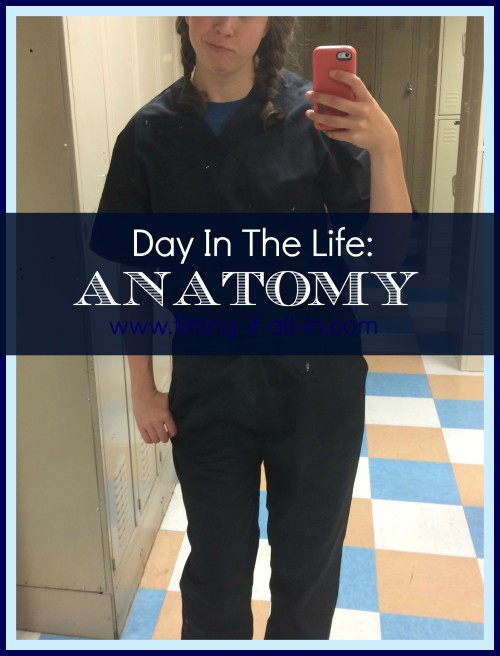 Day In The Life Anatomy