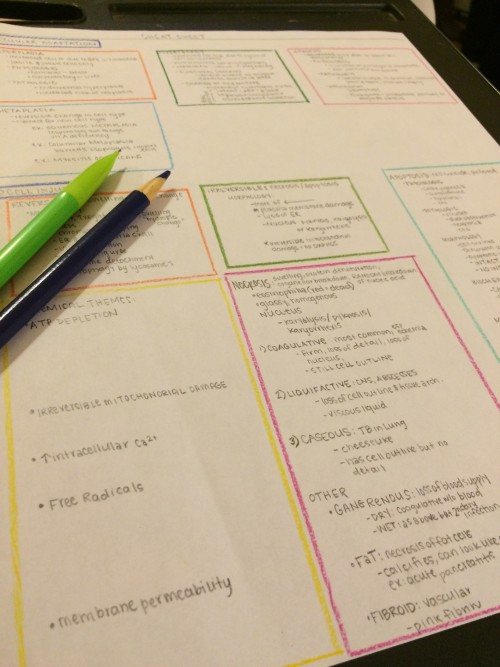 study tips - color coded study guide