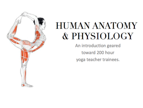 anatomy and physiology for yoga