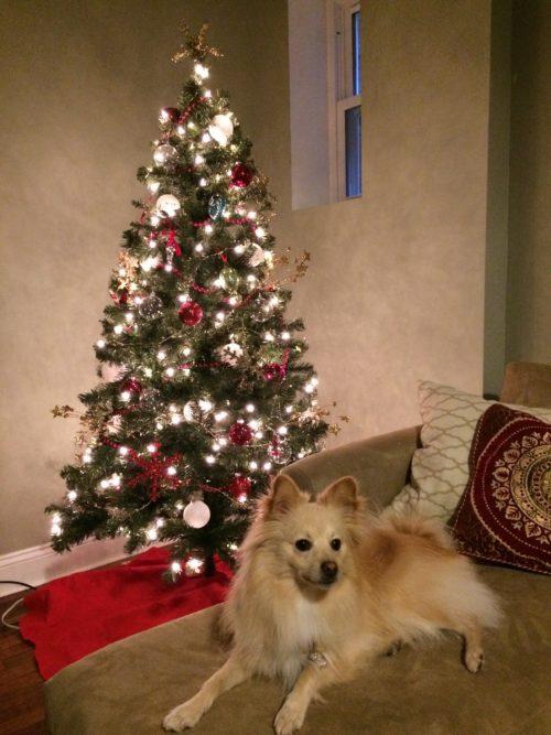Christmas Tree + Winston